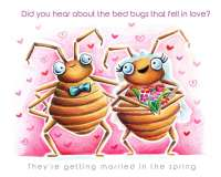 Bed Bugs in Love